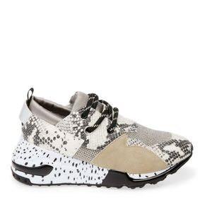 Steve Madden Cliff Sneakers